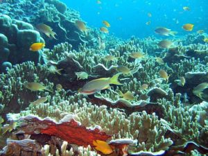 moalboal_coral_reef